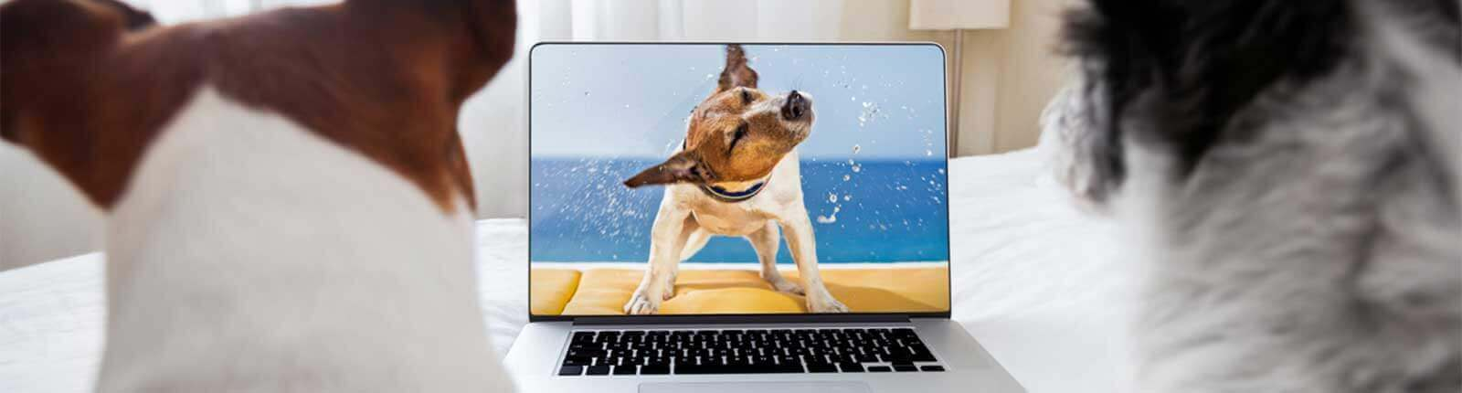 how to take care of your pet videos