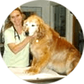 karen martin edler veterinary doctor