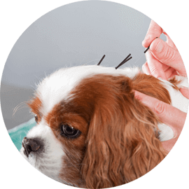 acupuncture services for animals durham