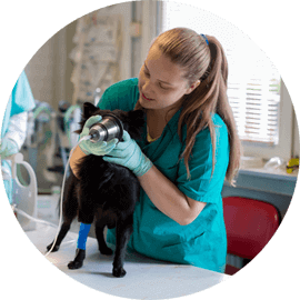 animal anesthesiology services durham new hampshire