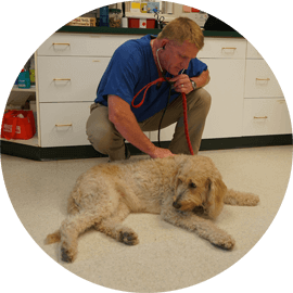 animal internal medicine services durham new hampshire