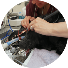 dental services for animals durham
