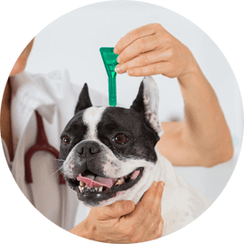 flea and tick removal services for animals durham