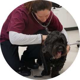 health checkup services for animals durham