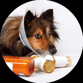animal pharmacy services durham new hampshire