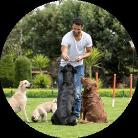 animal training services durham new hampshire